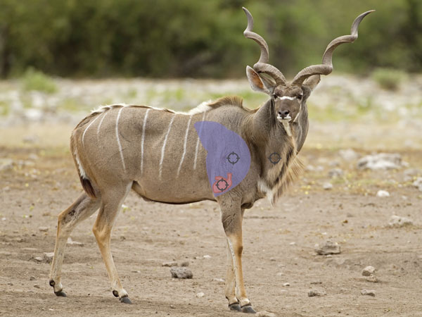 African Hunting Experience - Kudu bull with indication of ideal shot placement